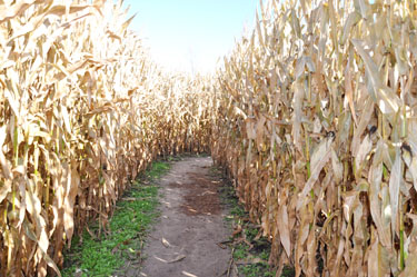 A-maze-in+corn+Gary%E2%80%99s+Pumpkin+Patch+is+a+popular+fall+attraction%2C+and+each+year+thousands+of+people+come+to+navigate+their+way+through+the+giant+corn+maze%2C+which+sprawls+across+eight+acres+of+land.+This+year%E2%80%99s+corn+maze+was+shaped+like+a+tractor.+Photo+by+Mallory+Shehi.%0A