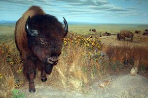 SLIDESHOW: Kansas celebrates 150 years of statehood