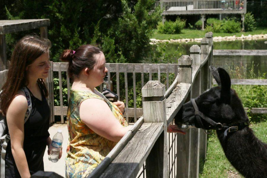 Llama Love: Two best friends lure the llama to the fence with food provided by the Topeka Zoo. The petting zoo was a popular attraction for visitors of all ages.