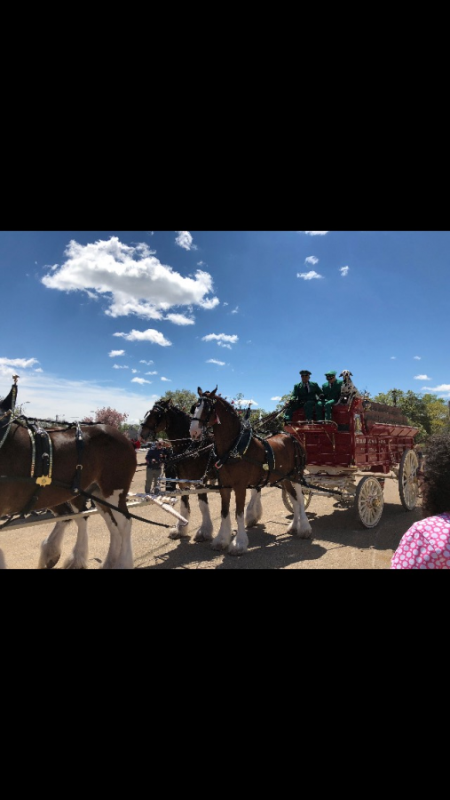 Budweiser Clydesdales visit Topeka to celebrate new law