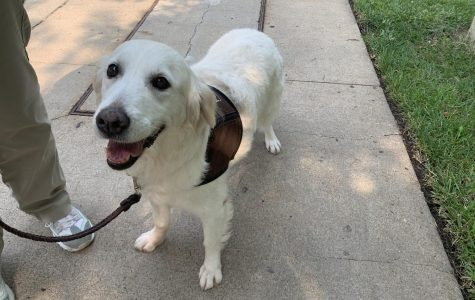 All Smiles: Jasmine is smiley and happy to see new friendly faces.