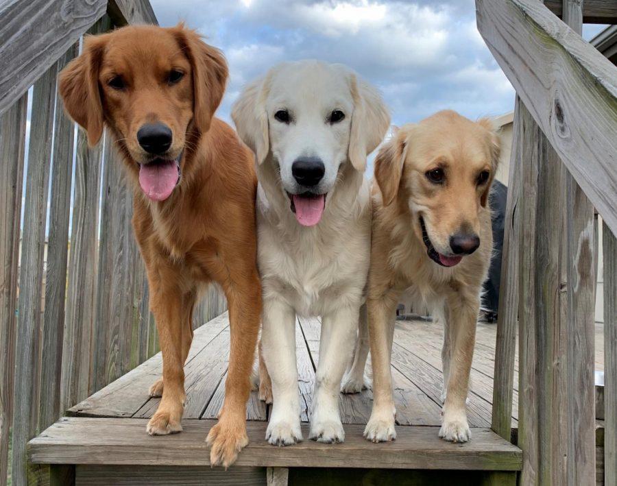 Andrew Kaufmans dogs