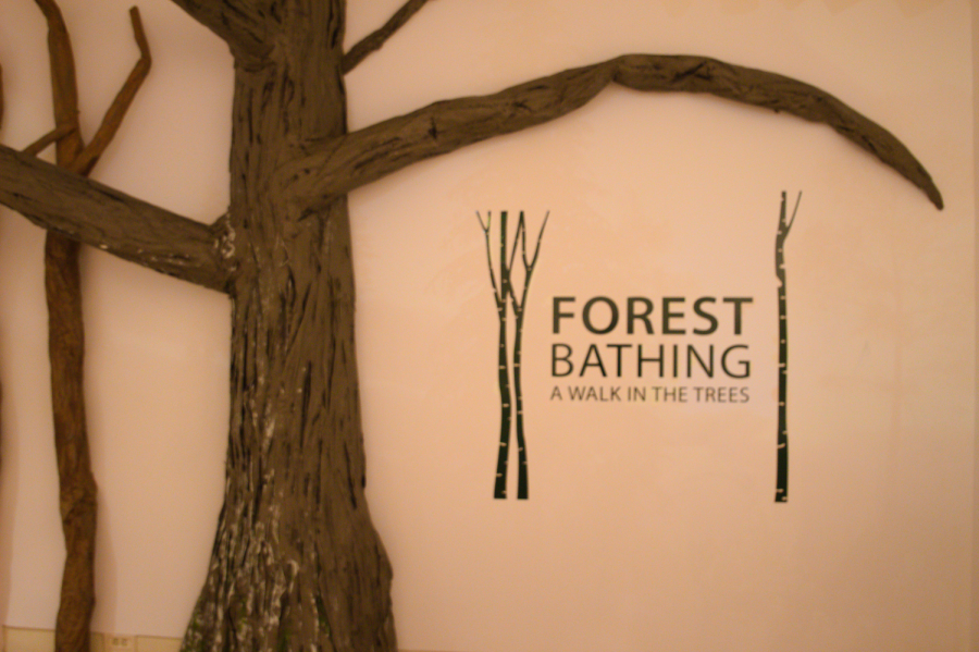 %22Forest+Bathing%3A+A+Walk+In+The+Trees%22+is+an+art+gallery+at+the+TPSCL+that+features+a+variety+of+forest+and+tree+artworks.+It+is+open+from+March+1-May+2%2C+2021.