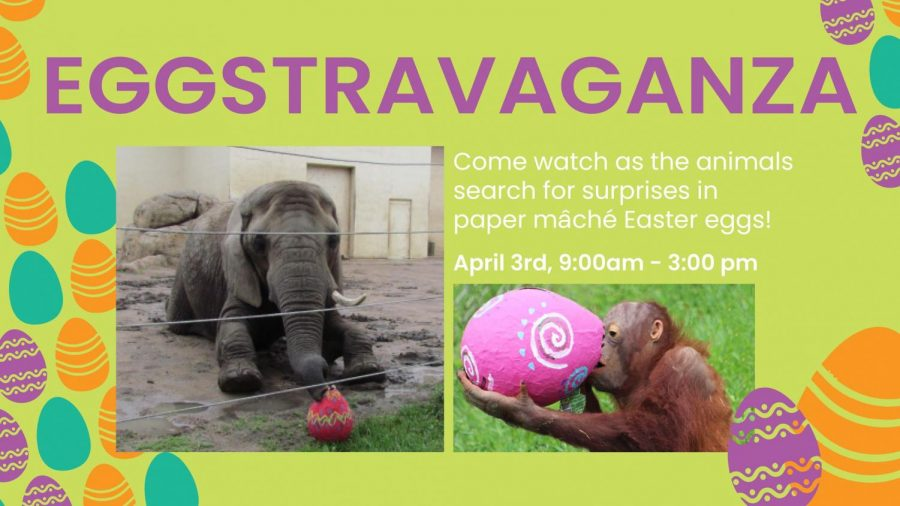 Look what I found: Watch the animals at the Topeka zoo look for Easter eggs in their enclosures. This is just one of the enrichment activities that the zoo uses for it's animals.