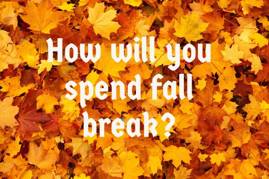 Bods+on+the+Block%3A+How+will+you+spend+your+fall+break